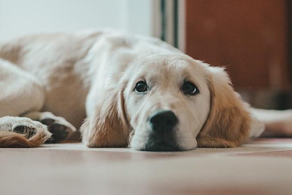 BentoLiving Nashville Pet Policy